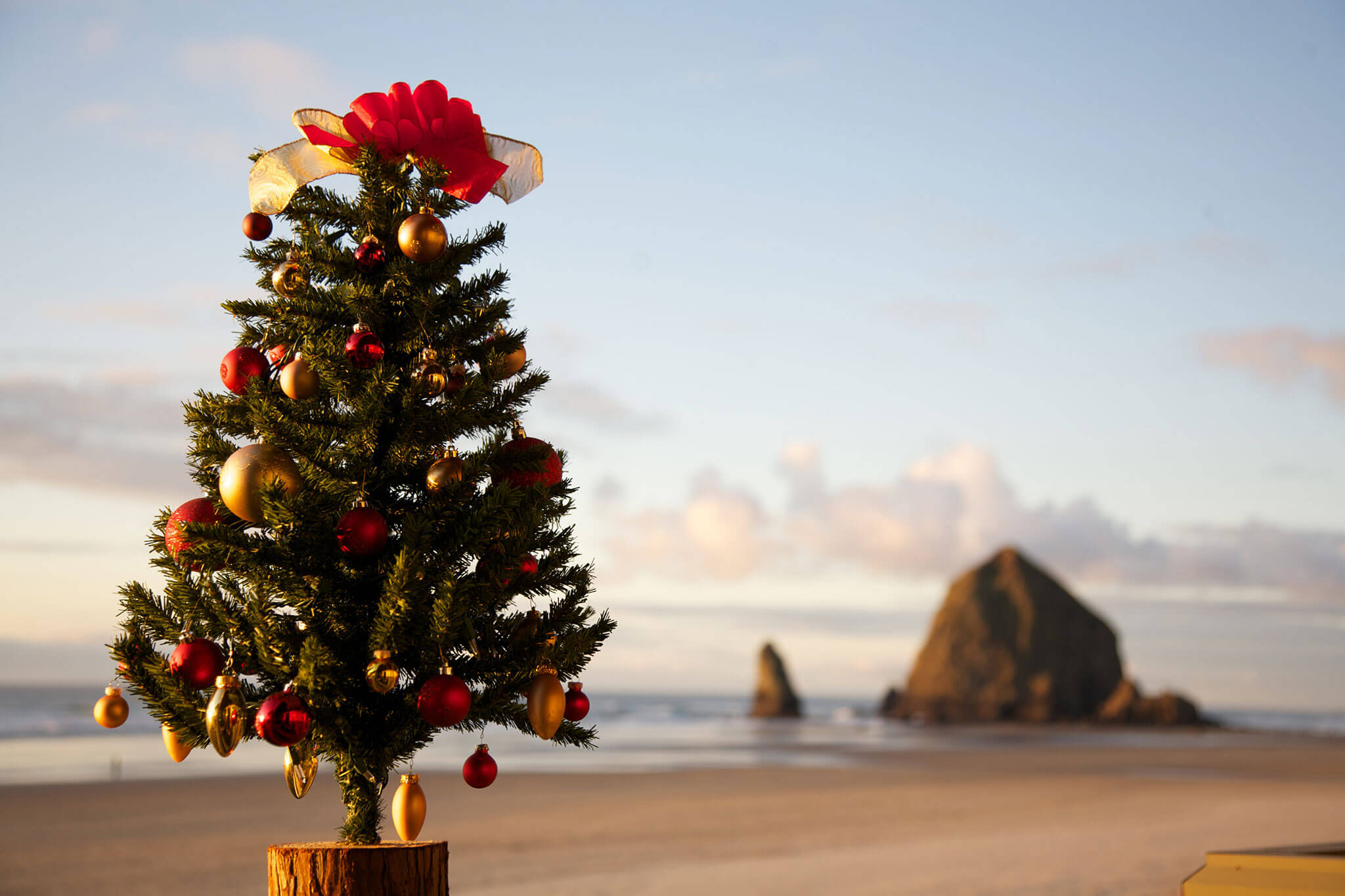 cannon beach christmas tree min stephanie inn oceanfront hotel in cannon beach oregon - Beach Christmas Tree